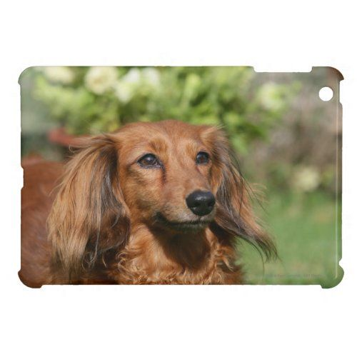 Red Long Haired Miniature Dachshund Ipad Mini Case Zazzle Com In 2020 Long Haired Miniature Dachshund Dachshund Puppy Long Haired Miniature Dachshund
