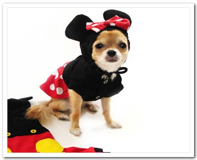 Minnie Mouse Dog Costume. Just in time for halloween.