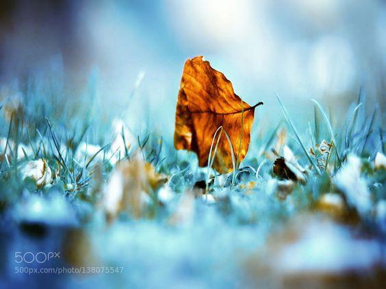 Leaf Wallpaper by amanguray