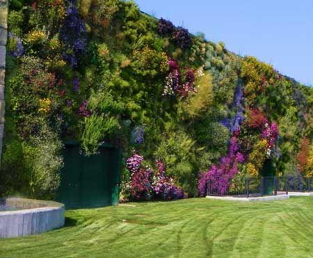 muro de russelia equisetiformis - Buscar con Google
