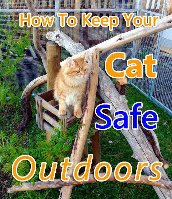 How To Keep Your Cat Safe Outdoors Cat Articles In 2020 Cat Safe Cats Outside Cats