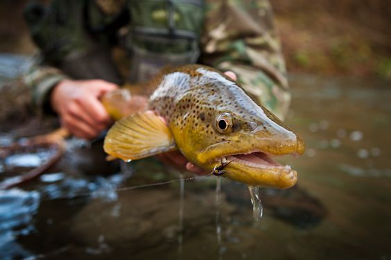 Pinterest the world s catalog of ideas for Vermont state fish