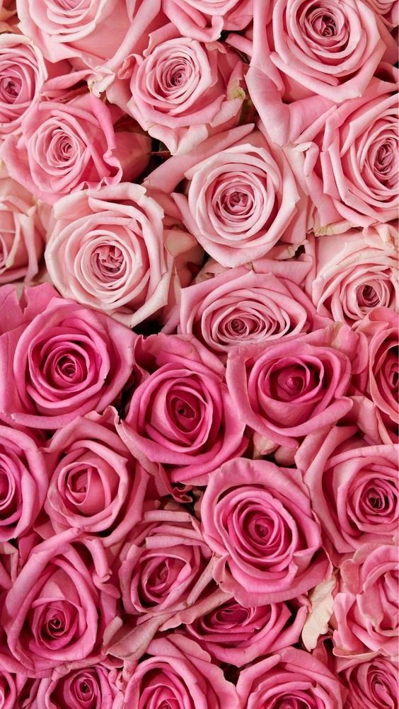 45 Beautiful Roses Wallpaper Backgrounds For Iphone In 2020 Floral Wallpaper Iphone Pink Wallpaper Iphone Pretty Wallpaper Iphone