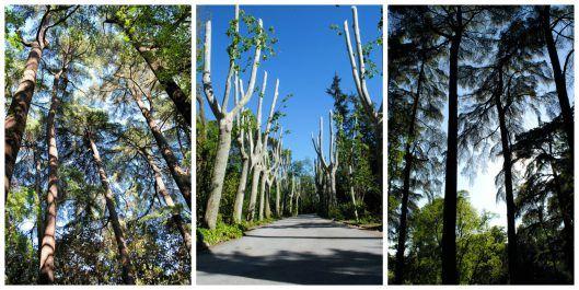 Árboles Jardines Campo del Moro