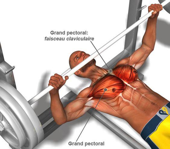 Programme de musculation pour pectoraux