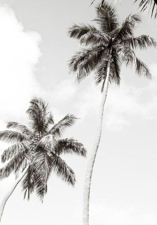 Black And White Palm Tree Wallpaper