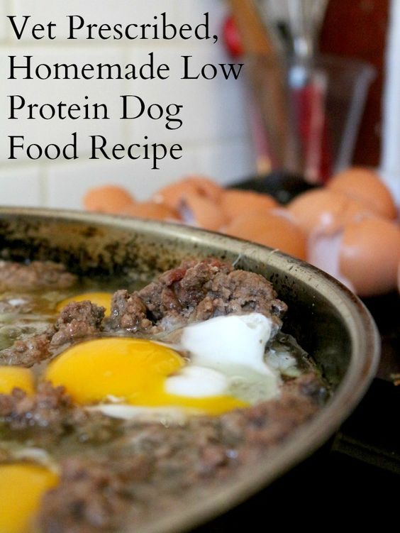 Best Low Protein Dog Food For Kidney Failure