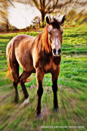 One of my friend Al's horses. Played with the Photoscape editing. Thanks for looking!  Bgood & God bless!