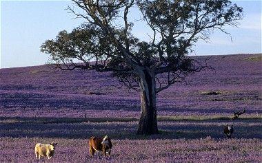 Barossa Valley near Adelaide, South Australia