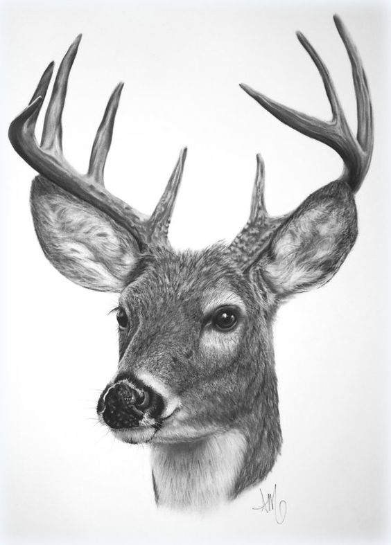 Explore Simple Deer Drawing, Easy Pencil Drawing, and more!