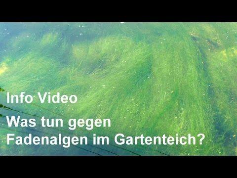 Fadenalgen Im Gartenteich Was Tun Um Fadenalgen Zu Bekampfen Video Info Lesen Youtube Gartenteich Garten Algen Im Teich