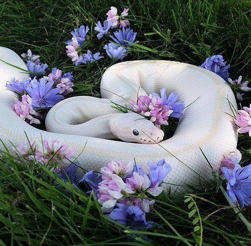 #snake #white #flowers #nature #beautiful