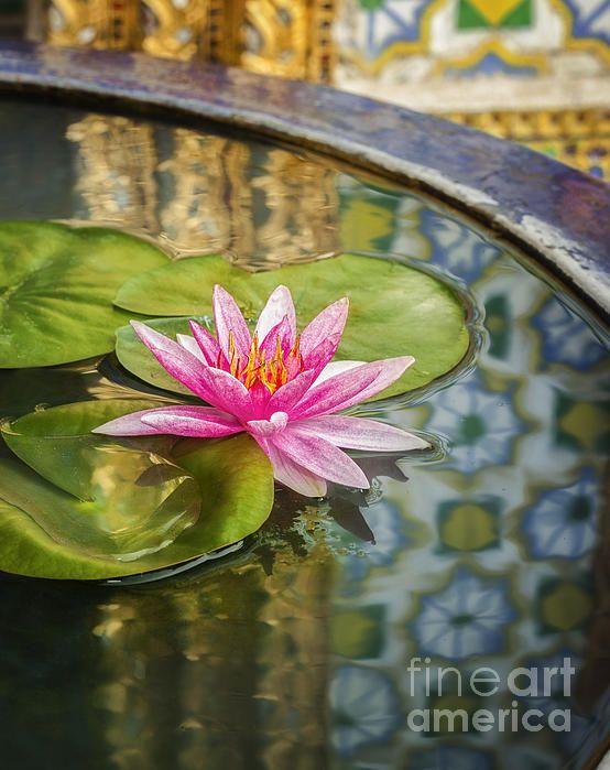 Pink Lotus, Anek Suwannaphoon, Fine Art America