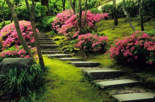 Google Image Result for http://japanesegarden.com/wp-content/uploads/2011/02/PJG976_jg07sp_natural_garden_azaleas_2b-scr-520x344.jpg