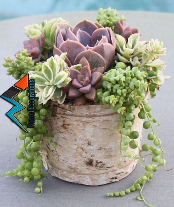 60 Charming Succulent Indoor Garden Ideas 2019 Page 40 Of 64