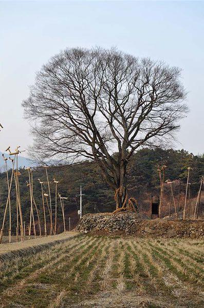 Torii: Markenzeichen der Kami – Religion-in-Japan
