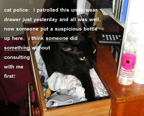cat police duties
