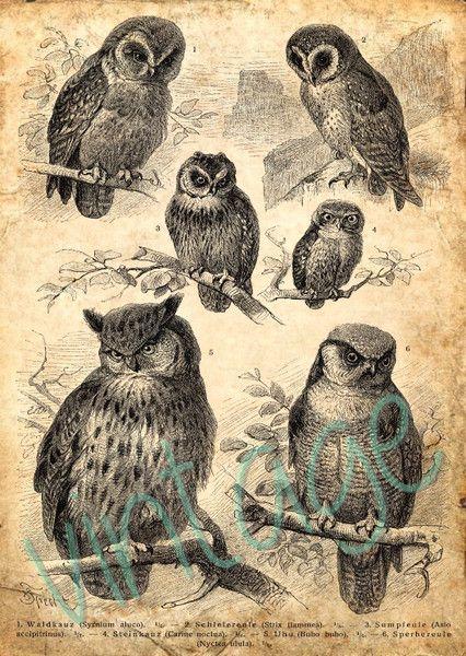 EULEN  r21 Kunstdruck Digiprint Vintage von Vintage Prints auf DaWanda.com
