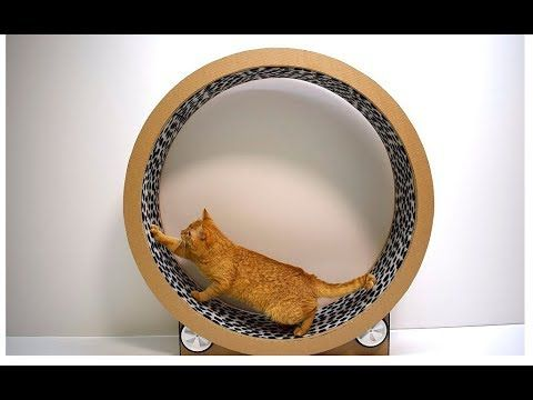 Make Your Cat An Exercise Wheel From Cardboard Cat Exercise Wheel Cat Exercise Cat Diy