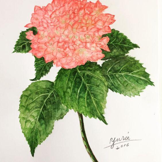 紫陽花を描きました  2週間前からチマチマ描いてやっと完成しました 紫陽花の葉は厚みがありボコボコしている部分をどう表現するかに悩みながら描きました 葉にかなり時間掛けたので今回花はちょっと手抜きしてしまったかな  #絵画#イラストレーション #イラスト#絵#ボタニカルアート#スケッチ#透明水彩画#あじさい#紫陽花#sketch#art#paint#illustration #drawing#flower by yuripyon2