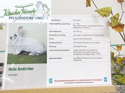 Hasen Kaninchen Kleintierzuchtverein Pfullendorf Bund Deutscher Rassegeflugelzuchter Kleintierfreunde Franz Lutz Schrei Kleine Tiere Zuchten Hase Kaninchen