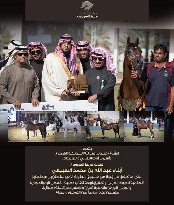مربط السويكت يهنئ المعود على الإنجاز الغير مسبوق بتحقيق اربع ذهبيات بمهرجان الأمير سلطان بن عبدالعزيز العالمي للجواد العربي ٢٠١٧ Movie Posters Arabian Horse