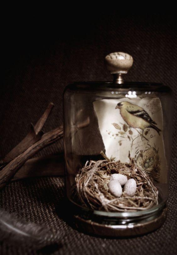 Birdnest Cloche  Glass Jar Assemblage by lisaleo on Etsy