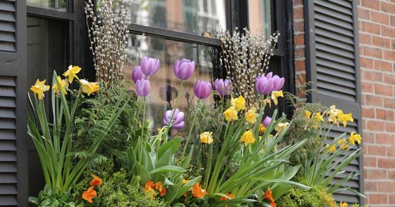 Ein Frühling auf Terrasse und Balkon ohne blühende Tulpen und Krokusse? Undenkbar! Auch als kleine Gruppen im Balkonkasten setzen die Frühlingsboten fröhlich bunte Akzente. Wenn Sie sich zum  Start der neuen Saison am bunten Blütenreigen erfreuen wollen, müssen Sie die Blumenzwiebeln jetzt pflanzen.