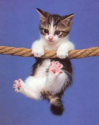 image chat chaton cascadeur chaton sur chat les chats pinterest. Black Bedroom Furniture Sets. Home Design Ideas