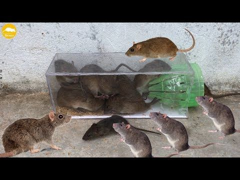 The Best Mouse Trap I Ve Ever Seen 12 Mice In Trapped A