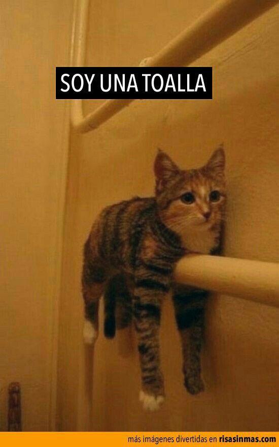 Un Corazon Entrelazado Springtrap X Tu Bajo Remodelacion El Gato De Angy Gato Borracho Fotos Divertidas De Gatos Memes De Gatos Divertidos