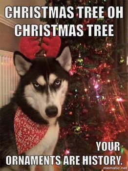 Funny Christmas Dog Pics Dog Quotes Funny Funny Husky Meme