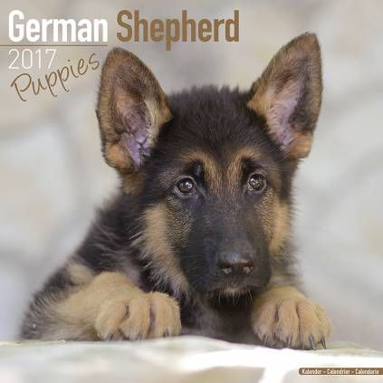 Avonside Hunde-Kalender 2017Avonside Hunde Wandkalender 2017: German Shepherd Puppies - Deutscher Schäferhund