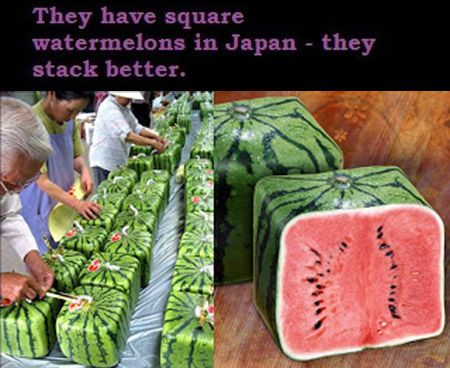21 things that will instantly make you happy to grow - Square watermelons how and why ...