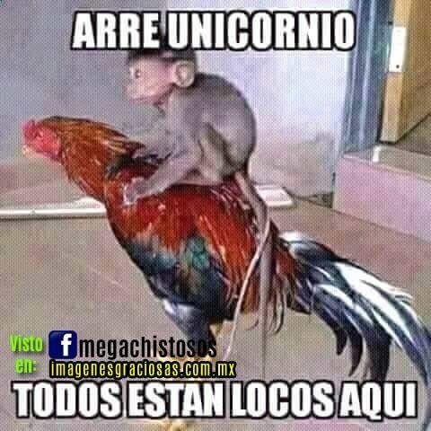 Imagenes Muy Chistosas Y Graciosas Espero Que Sean De Su Agrado Y Los Hagan Reir Un Buen Rato Https K60 Kn3 Net Taringa Monkey Memes Spanish Memes Humor
