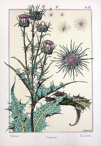 Selección de los dibujos expuestos de la Real Expedición Botánica ...