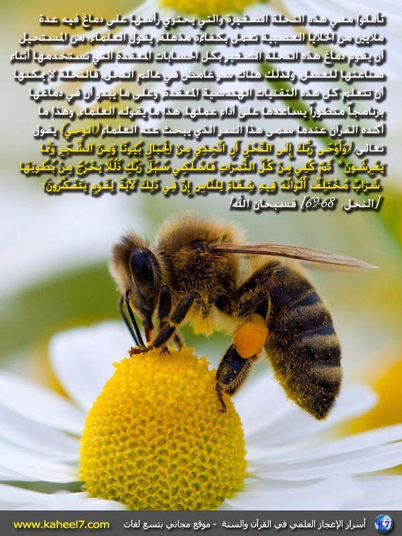 DesertRose:::صورة وآية: من أسرار النحل: