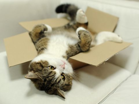 Maru- if you do not know who Maru is, please go to YouTube and educate yourself…