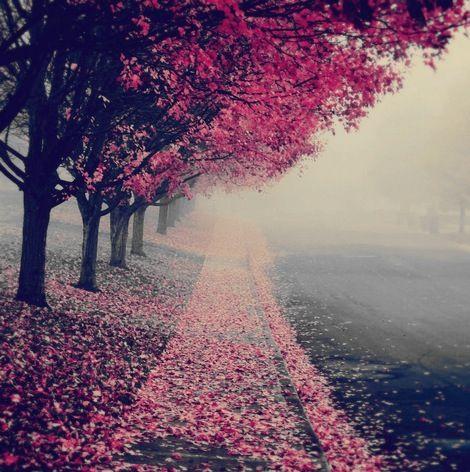 Let's take a walk!
