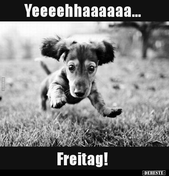 Yeeeehhaaaaaa Freitag Freitag Spruche Wochenende Lustig