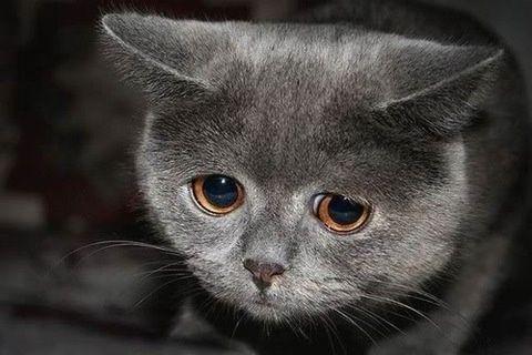 とんでもなく悲しそうな顔をしてる猫