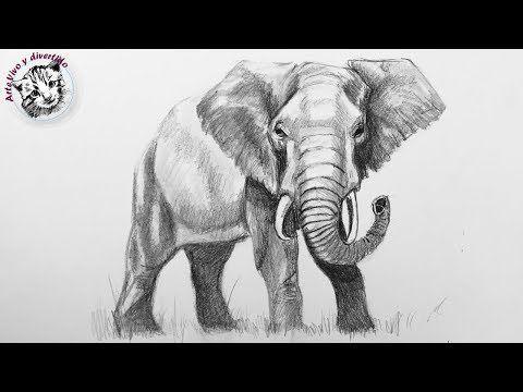 Como Dibujar Un Elefante Realista Con Lapiz Muy Facil Y Paso A