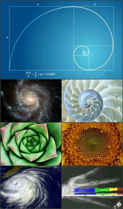 succession de fibonacci en la naturaleza pdf