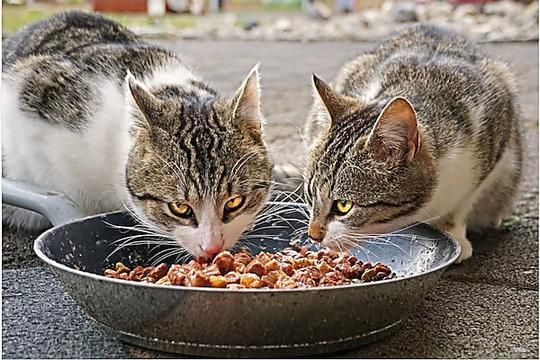 How To Get A Kitten To Eat From A Bowl