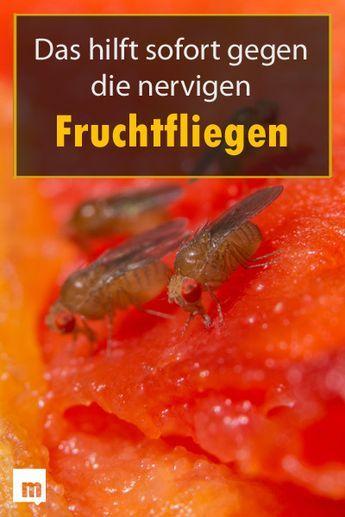 Fruchtfliegenfalle Selber Machen So Geht Es Ganz Einfach Fruchtfliegenfalle Obstfliegen Fruchtfliegen