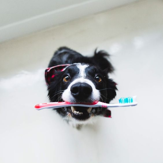 how to brush your dog's teeth the right way