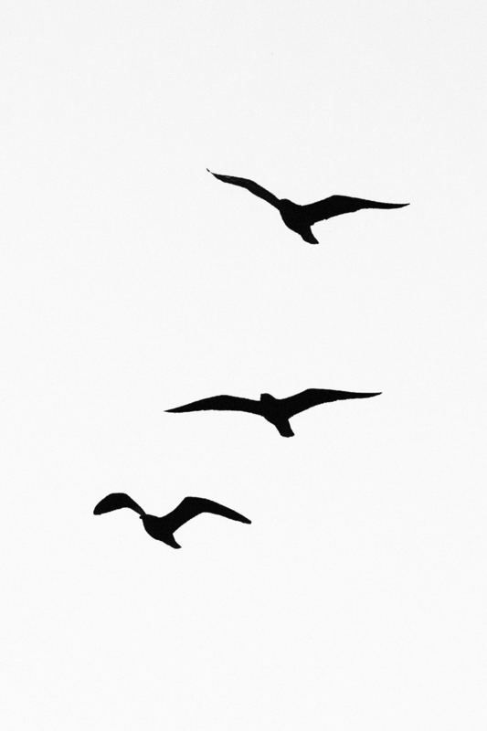 Lesser Black Backed Gull Bird Silhouette Tattoos Seagull Tattoo Small Bird Tattoos