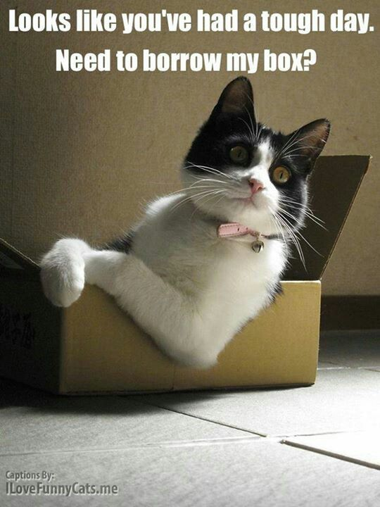Cat in a box no surprise here. LOL: