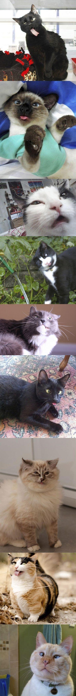 Funny cat faces: