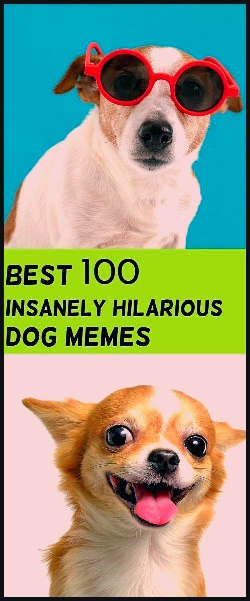 Perros Graciosos Http Enviarpostales Es Perros Graciosos 455 Perros Animales Cute Animal Memes Animal Memes Cat Memes